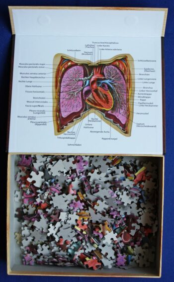 Zubehör: Dr. Livingstons Anatomiepuzzle Teil 2