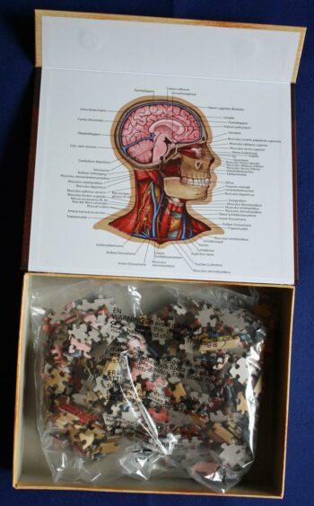 Zubehör: Dr. Livingstons Anatomiepuzzle Teil 1