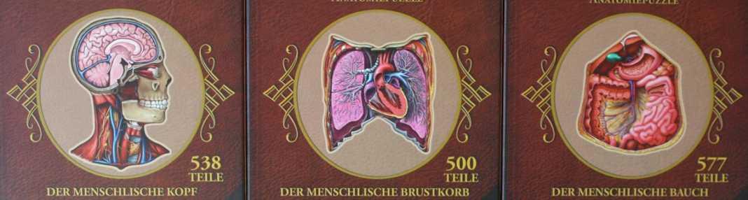 Dr. Livingstons Anatomiepuzzle vom Schwerkraft-Verlag.