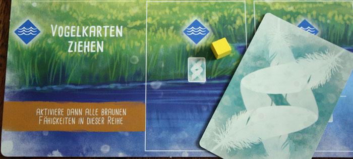 Der Spieler erhält eine neue Vogelkarte.