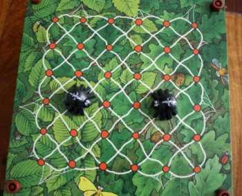 Aufbau des Spinnennetzes